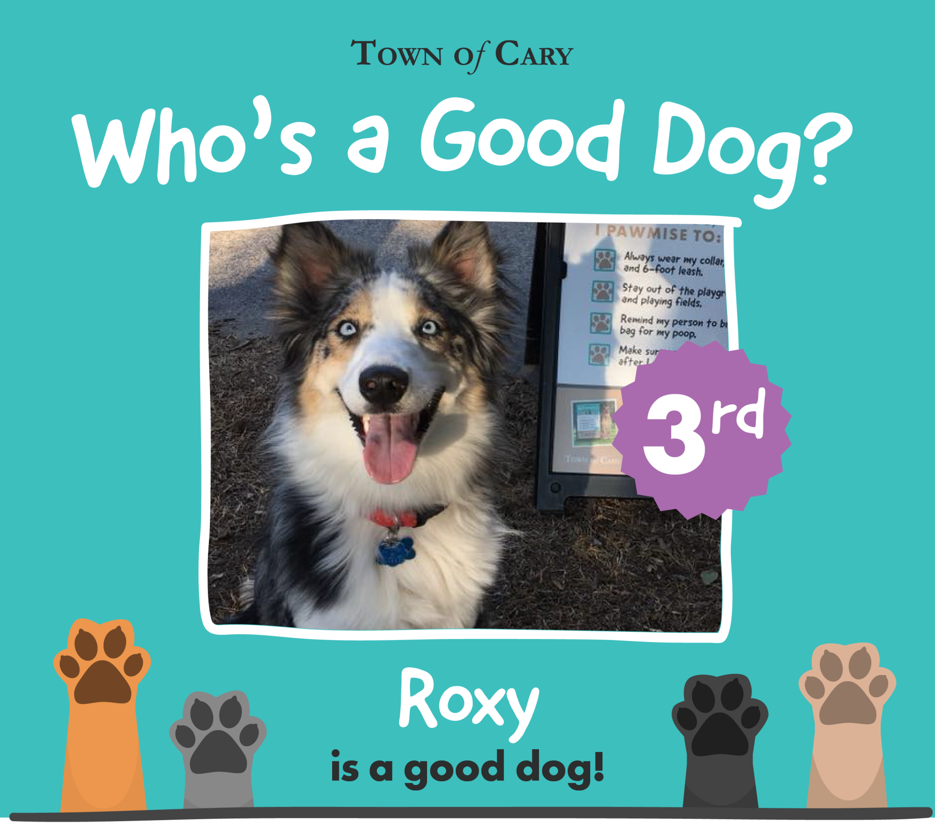 GoodDogThirdPlace_Roxy