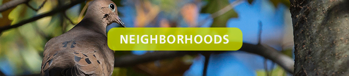 TOC_CaryGreenNeighborhood_Neighborhoods_Header
