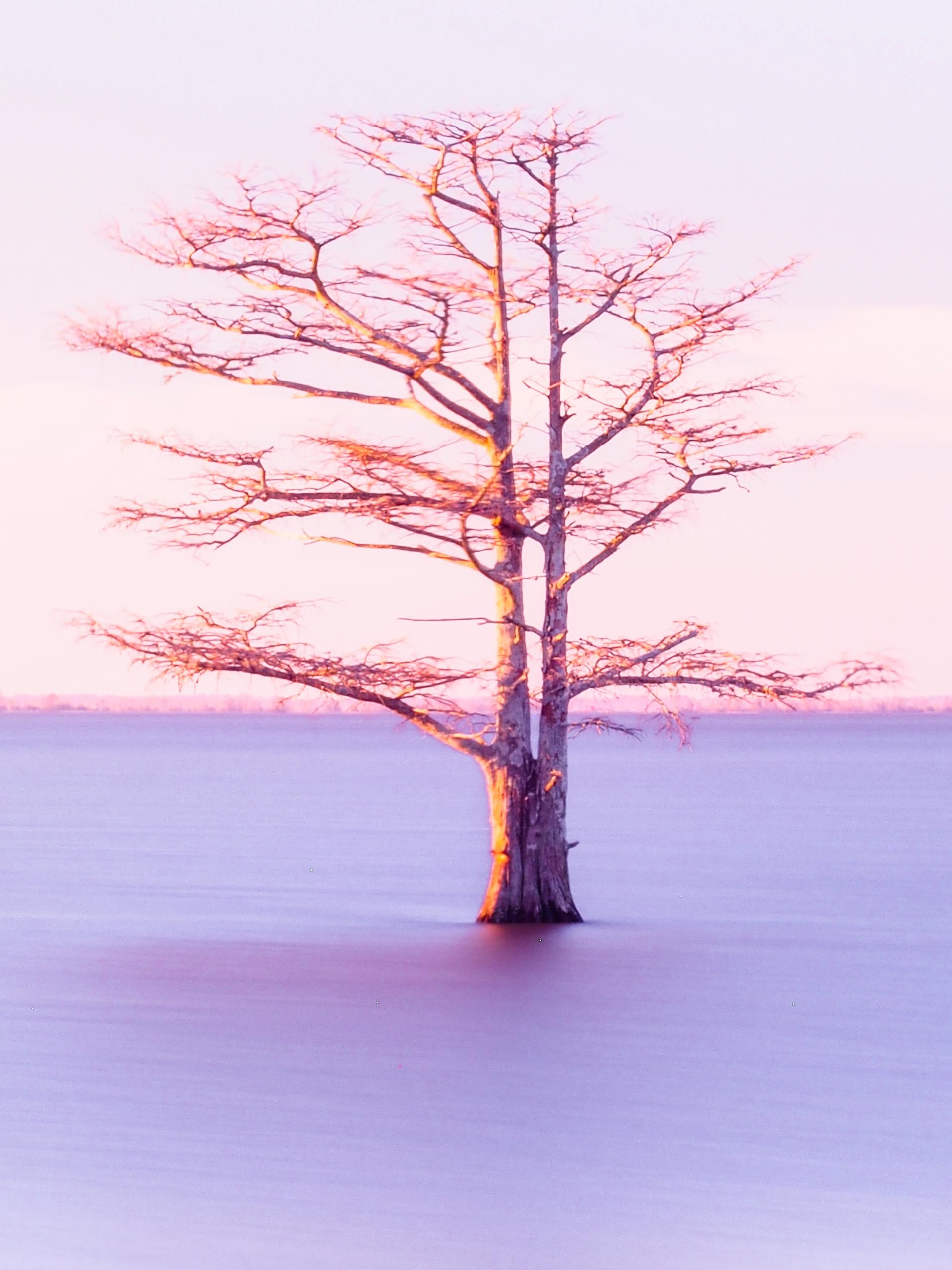 GALLERY_Cary Photographic Artists-Palani Mohan Lone Cypress
