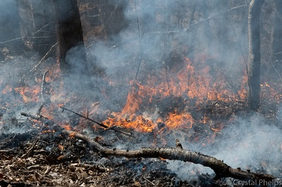 Controlled burn March 2019 at Hemlock Bluffs Nature Preserve