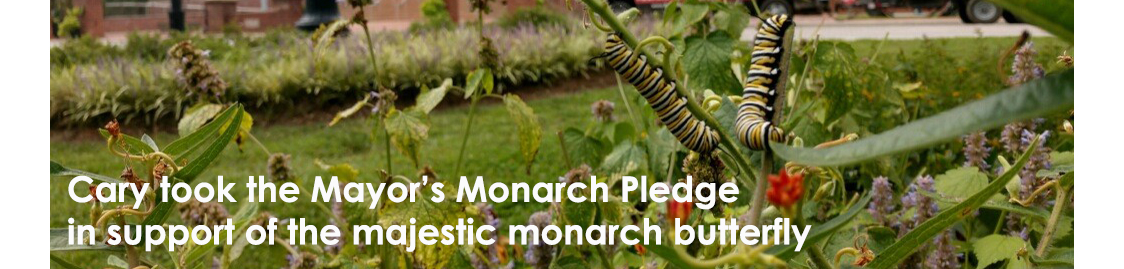 Cary took the Mayor's Monarch Pledge in support of the majestic monarch butterfly