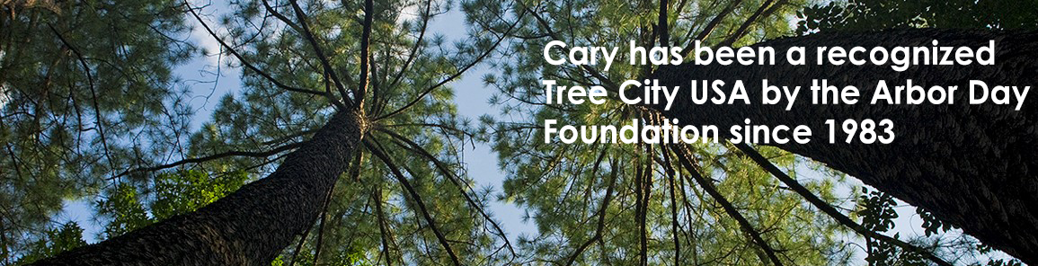Cary has been recognized Tree City USA by the Arbor Day Foundation for over 35 years