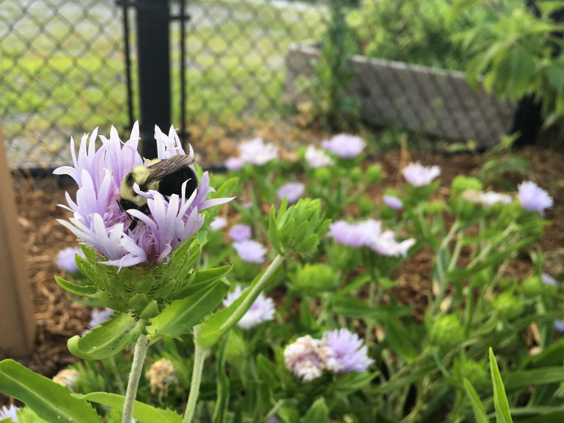 Explore pollinator and wildlife projects through the Cary Green Neighborhood Program