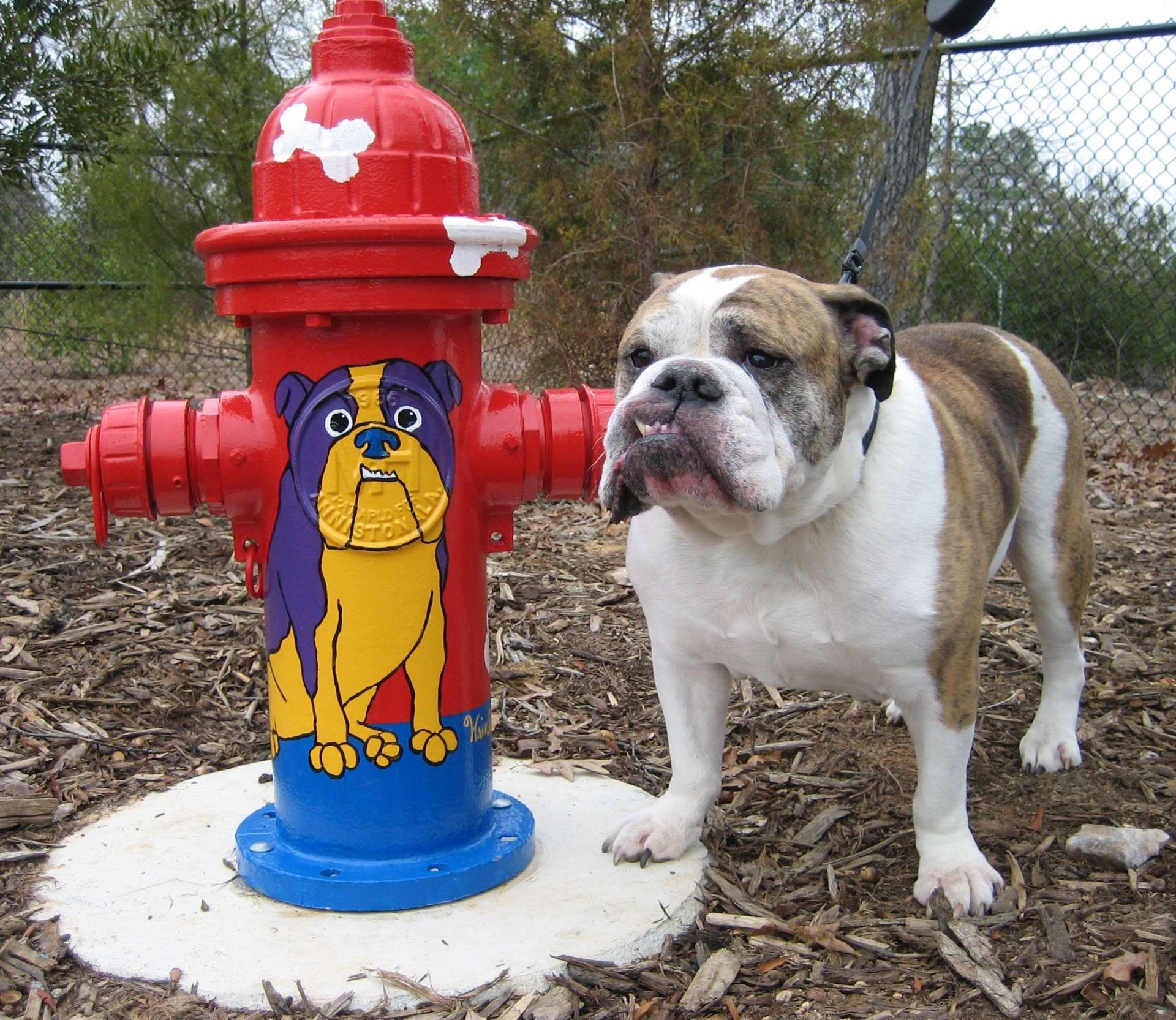 Dog Park- WRINKLES with his hydrant